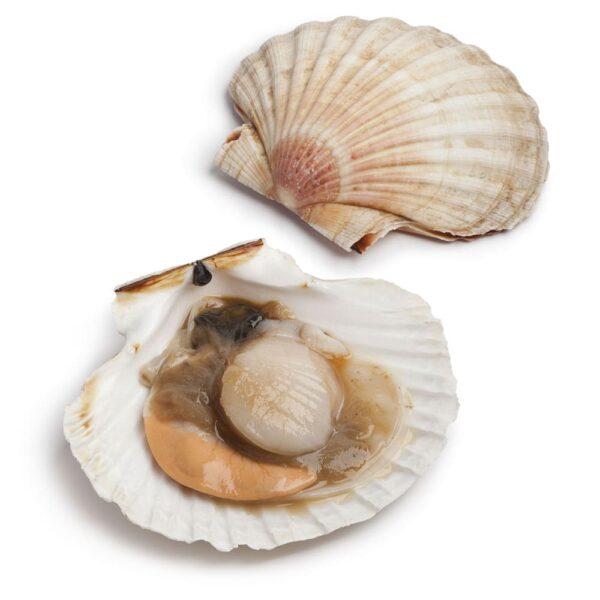 Pesce – Frutti di Mare – Crostacei